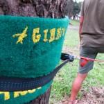 Gibbon Treewear Review